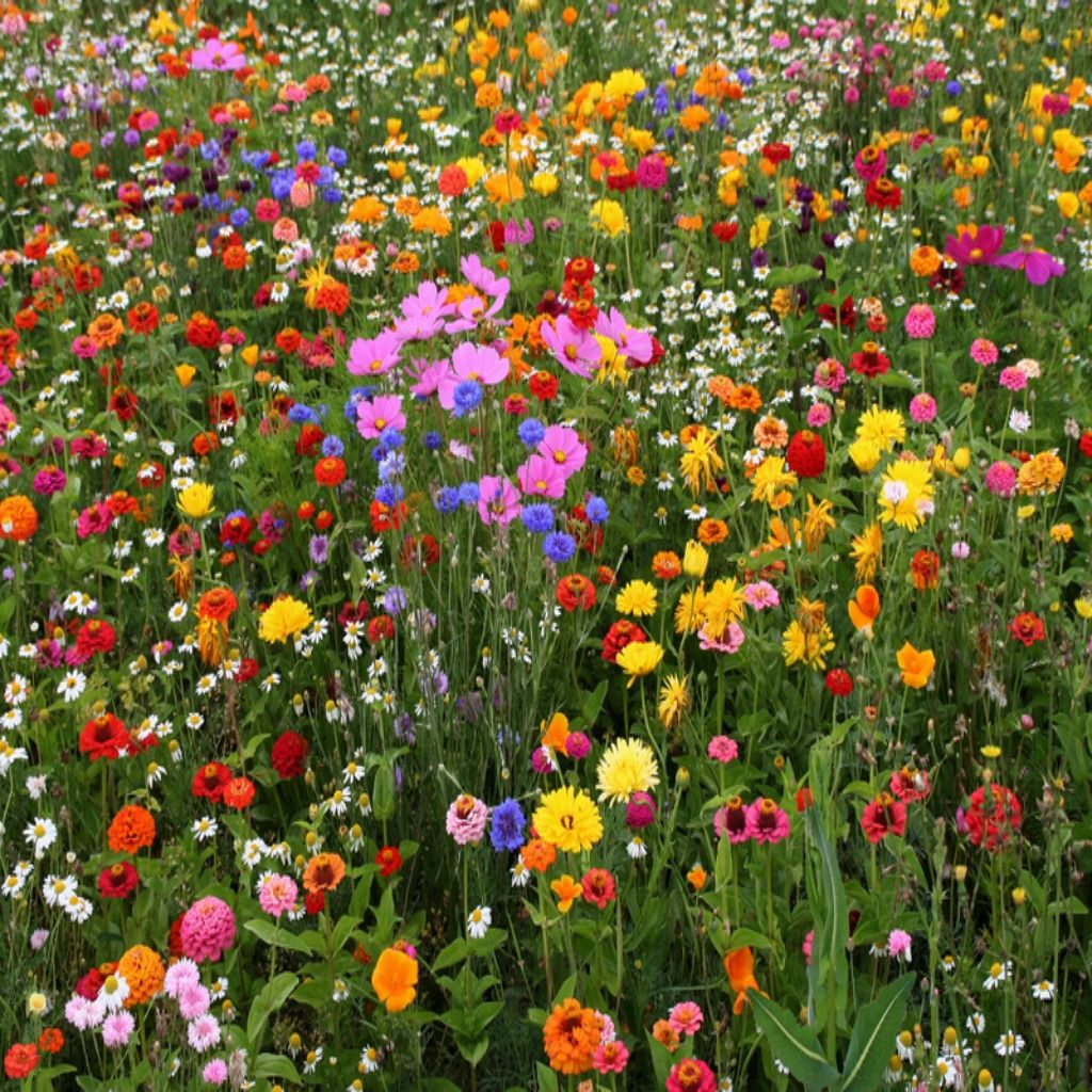 Wildflower Garden | Posted On March 27, 2012 By Vermont Wildflower Farm