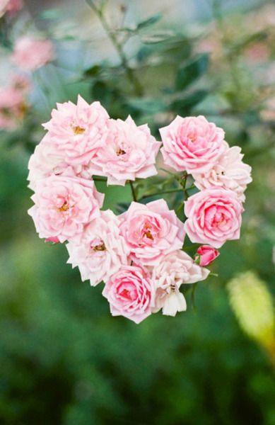 Pink Roses Roses Fleurs Rose Amour Et Coeur