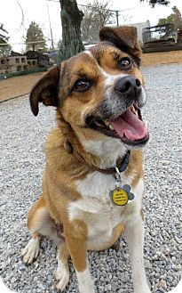 Edmond Ok Beagle Pug Mix Meet Zoe A Dog For Adoption Dog