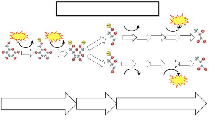 glycolysis blank diagram | Apologia Biology | Pinterest ...
