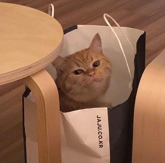 Baby Katzen Bild Von Anna Lena Meiseberg Auf Cats Meow Susse Tiere Katzen