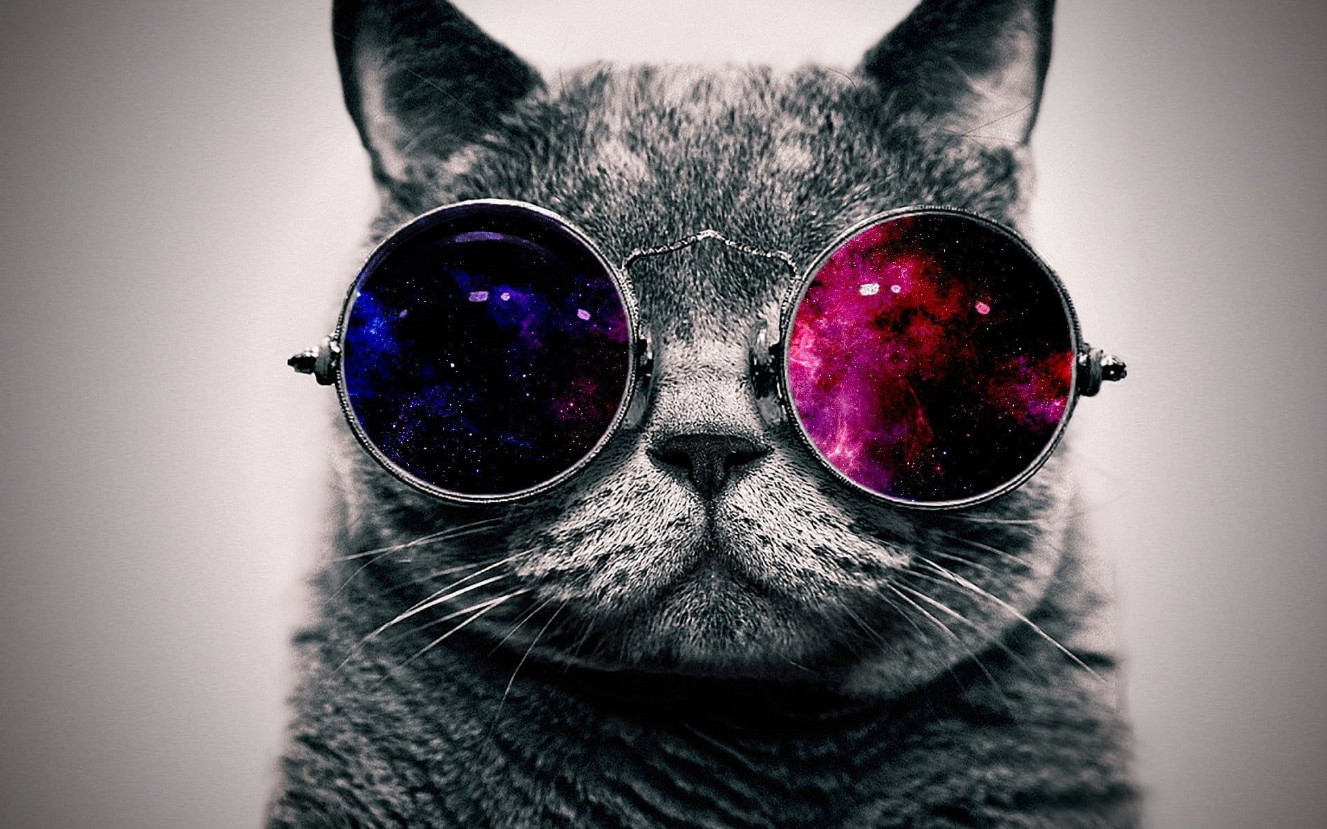 Grey Cat And Sunglasses Cat Glasses Space Abstract Minimalism Animals Digital Art Selective Coloring S Cat Posters Cool Wallpapers Cats Glasses Wallpaper