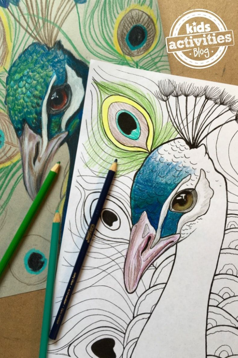 peacock coloring pages for kids  kids activities  pfau