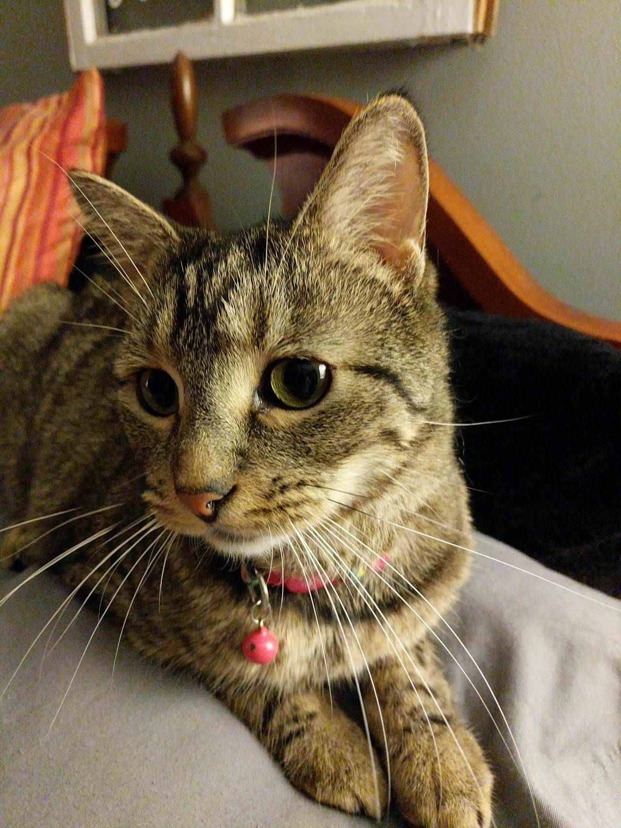 This Is Ellie My Wife Never Had Cats Growing Up And Was Skeptical About It When We Got Married And I Wanted To Adopt A Cat Adoption Cats Cute Cats And