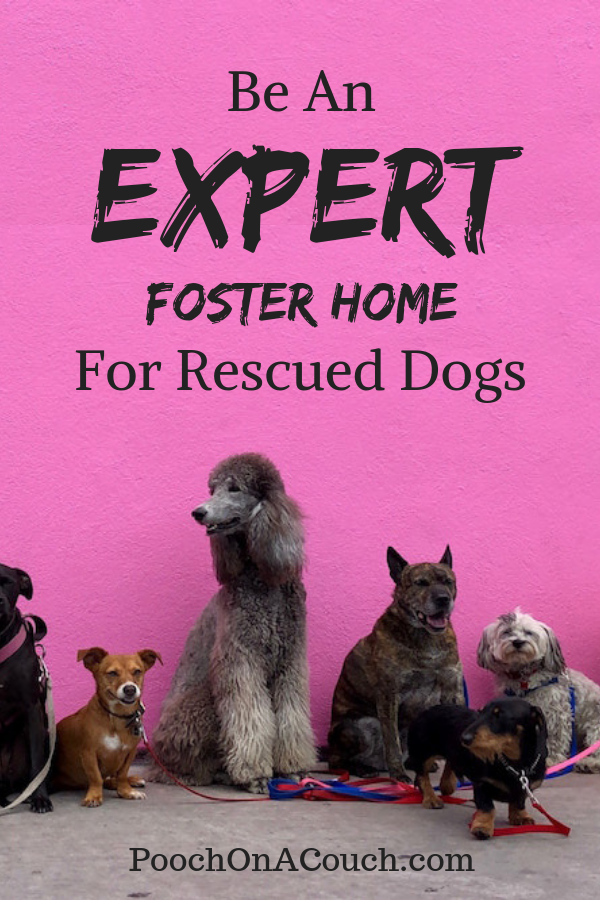 Not Only Do Rescue Organizations Need Foster Homes For Dogs They Certainly Can Use Skilled Foster Homes See If You Have Some Of Foster Home Rescue Dogs Dogs