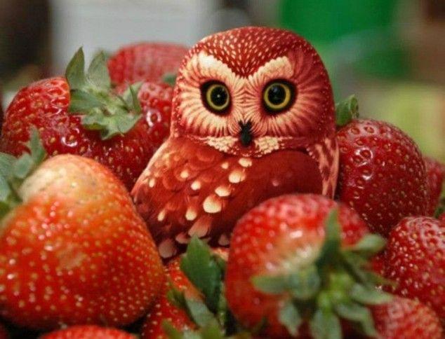 Diet fruit vegetable owl