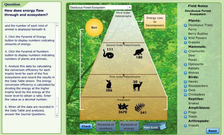 VIRTUAL LAB- how does energy flow through an ecosystem? | Ecosystems ...