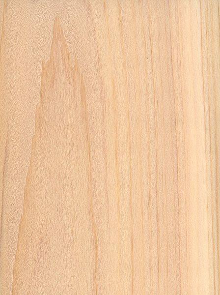 Northern white cedar thuja occidentalis woodgrain