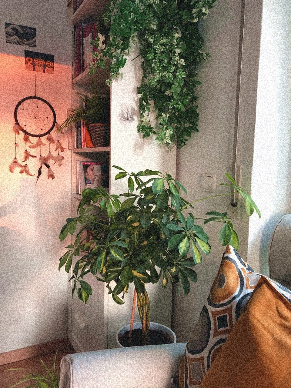 𝐬𝐮𝐪𝐚𝐩𝐥𝐮𝐦 ∘⁺ in 2020 Day and nite, Plants, Plant hanger