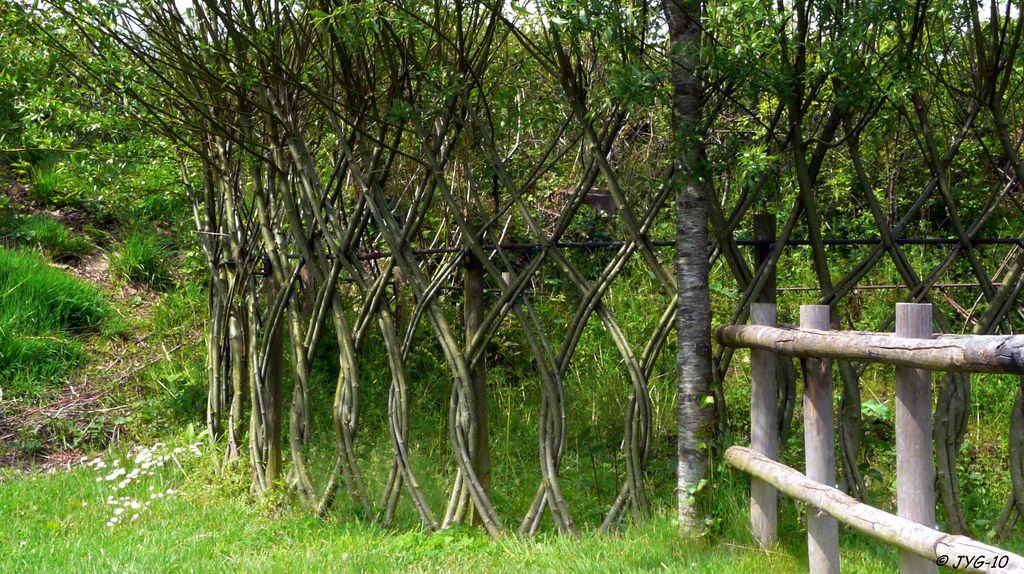 osier fence sculpture v g tale pinterest boutures id es pour le jardin et osier. Black Bedroom Furniture Sets. Home Design Ideas