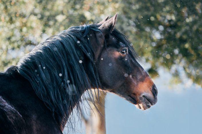 Fotos Pferde In Der Natur I Anna Ibelshauser Pferde Pferde Hintergrundbilder Pferde Fotografie