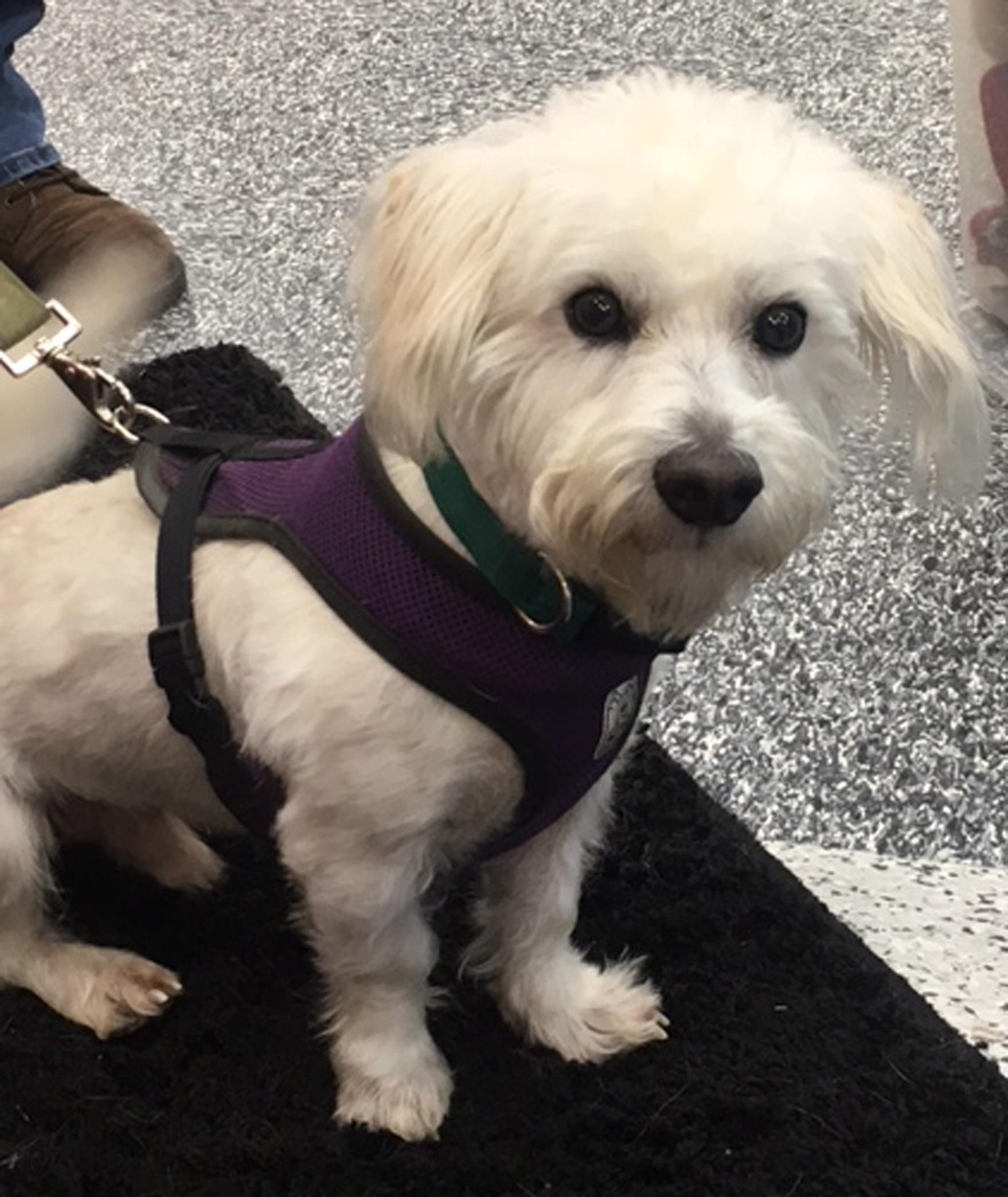 Adopt Rupert On With Images Dog Lovers Dogs West Highland White Terrier