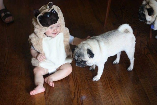 Pug Baby Costume Pugs Funny