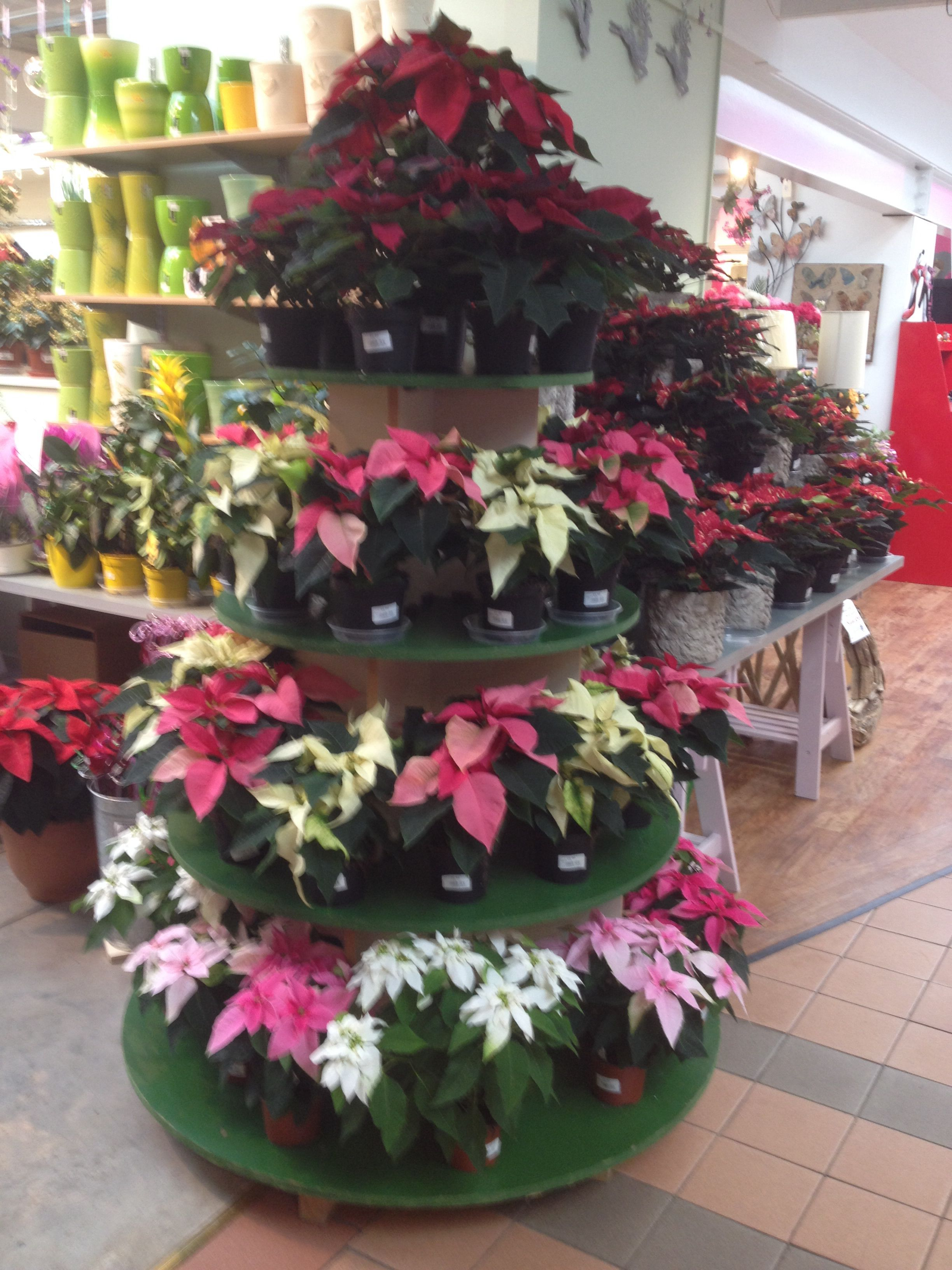 Tiered Poinsettia display Garden center displays, Garden