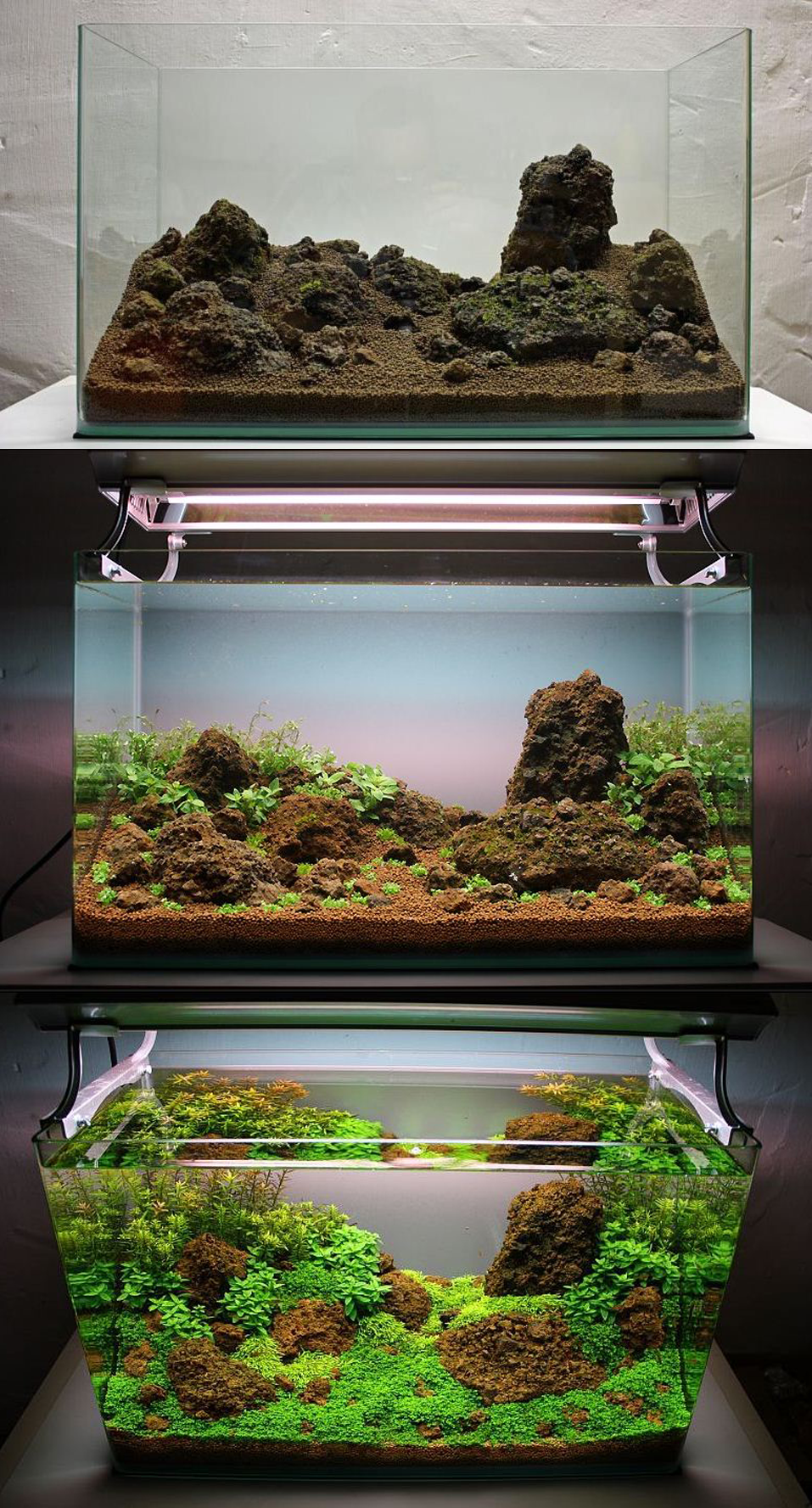 Aquascape Mini Sederhana : aquascape, sederhana, Membuat, Aquascape, Sederhana