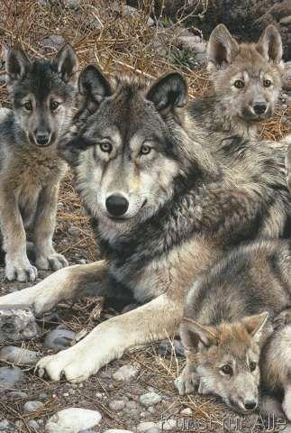 Carl Brenders Den Mother Detail Wolfskunst Wolf Welpen