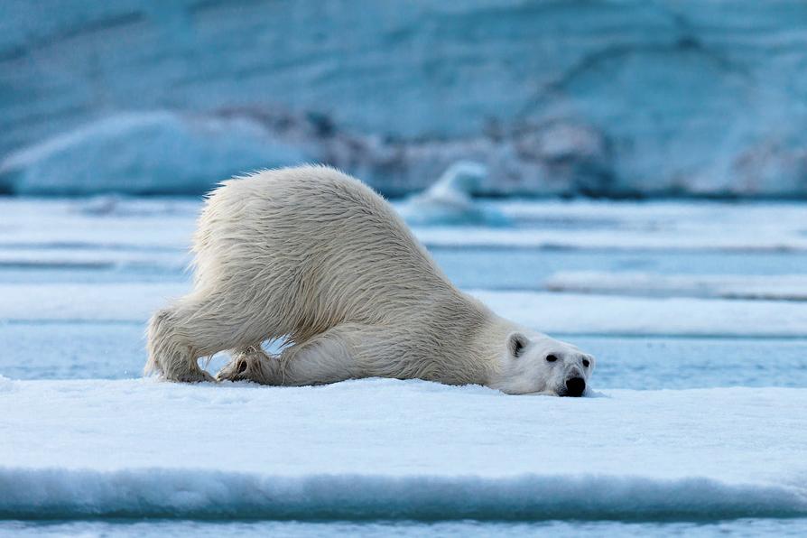 забавные фото белого медведя практические составляющие