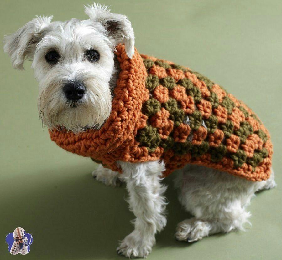 Pin de Gege Gege en Fashion for dog lovers | Pinterest