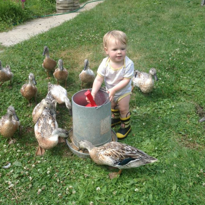 How To Raise Friendly Ducks!
