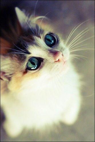 ¿Qué debe llamar la atención de este precioso gatito? Admítanlo es una buena pregunta