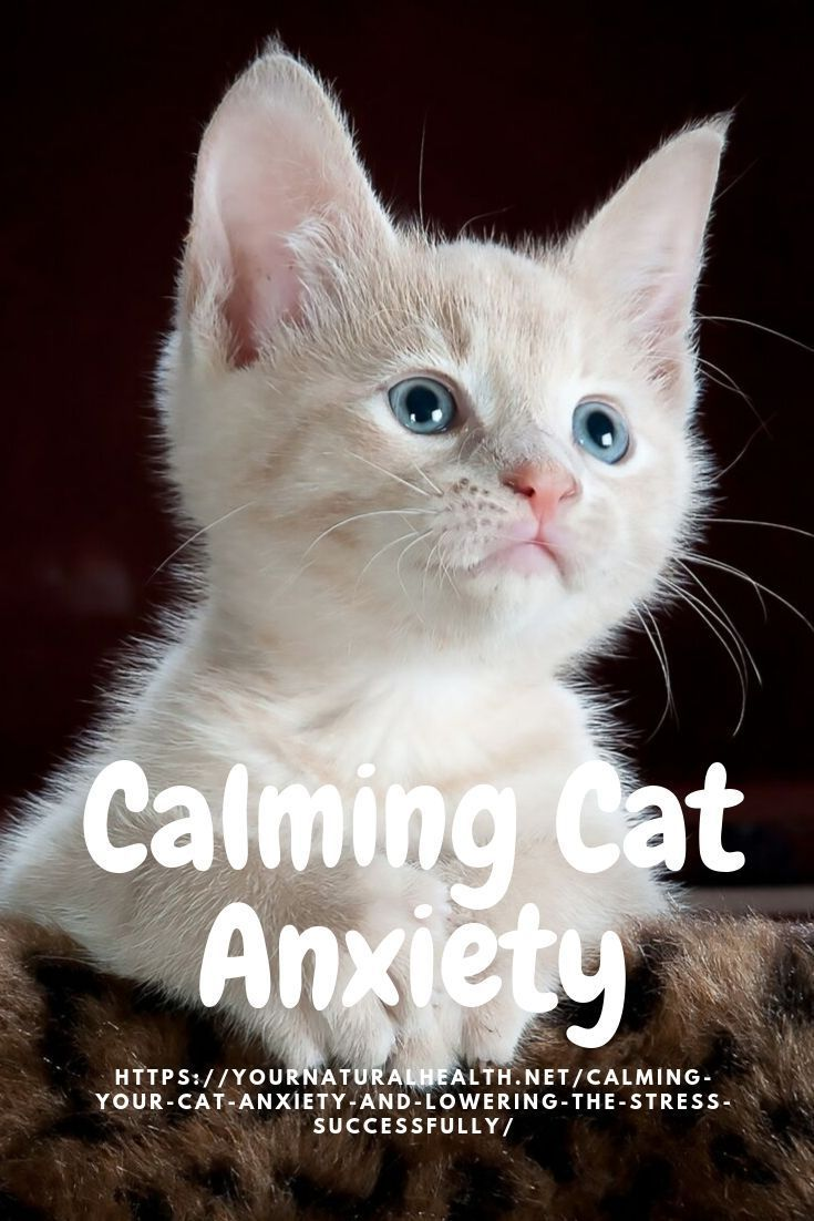 Is your kitty scared? Help him! Cat anxiety, Animals