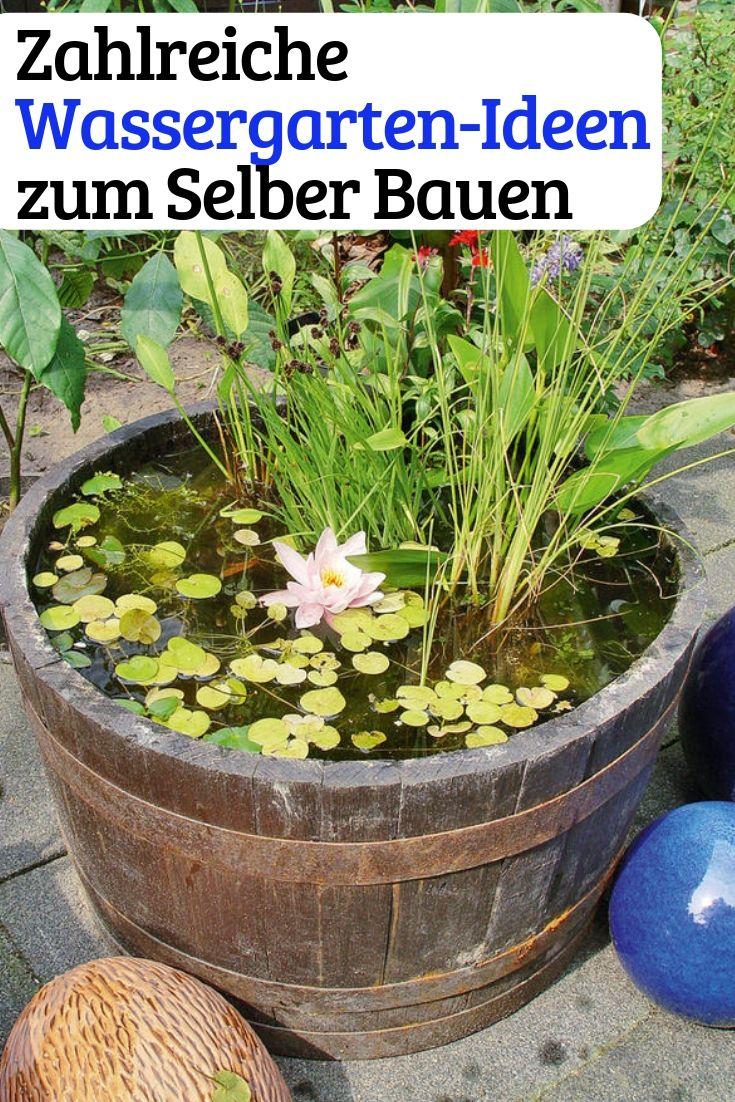 Photo of water garden