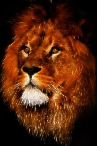 Lion in flames | Strong beauties | Lion, Lion, lioness ...