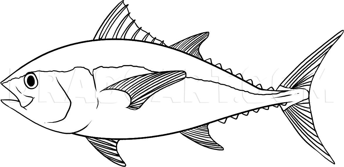 How To Draw A Tuna Step By Step Drawing Guide By Dawn Dragoart Com Fish Drawings Fish Coloring Page Drawings