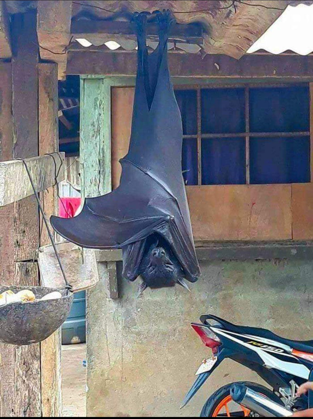 8 Twitter オオコウモリ コウモリ 怖い動物