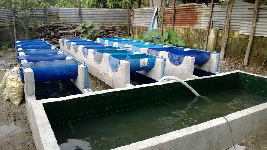 Aquaponics Commercial Fish Farm Tanks Aquaponics A System