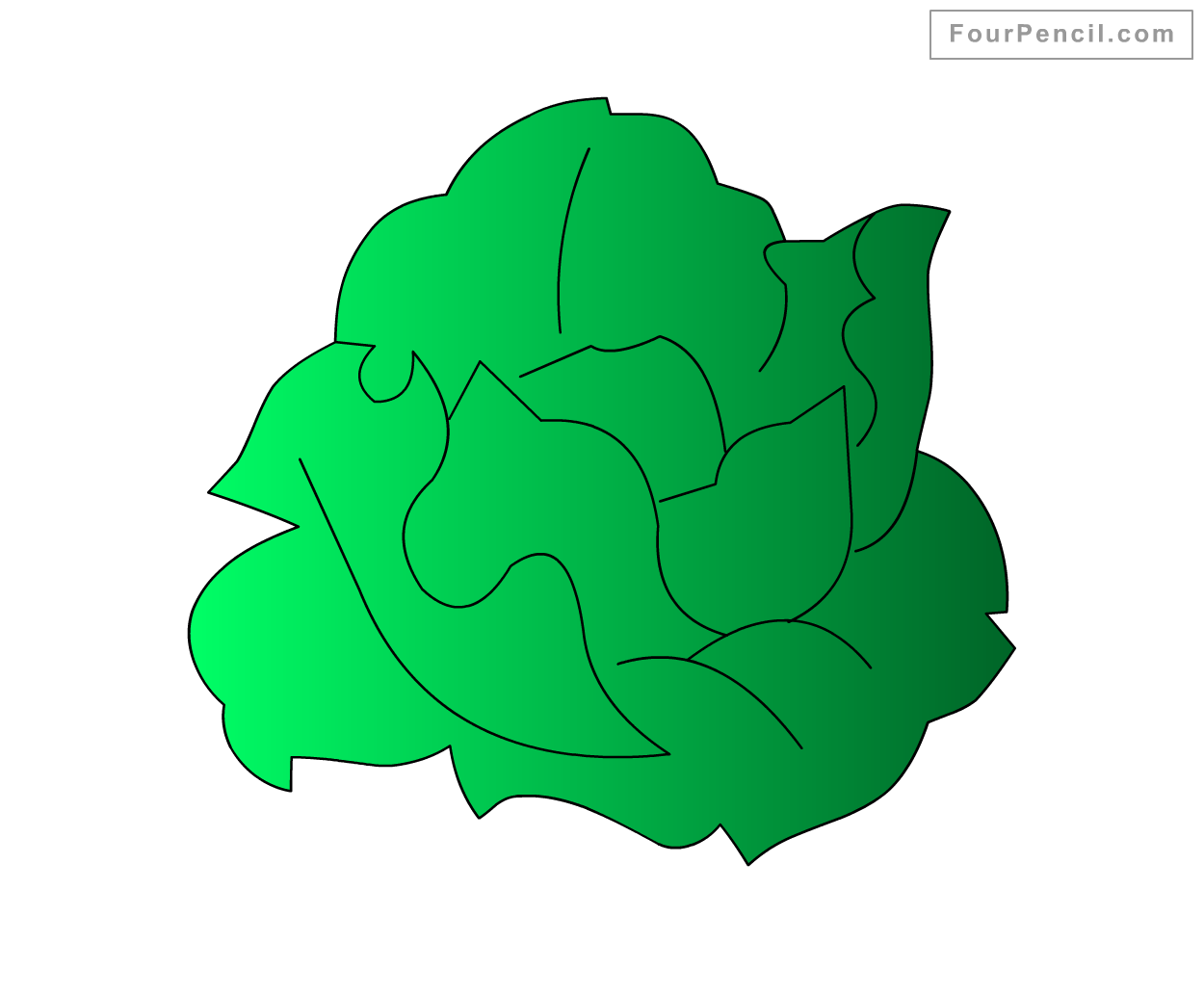How To Draw Cabbage For Kids Step By Step Drawing Tutorial