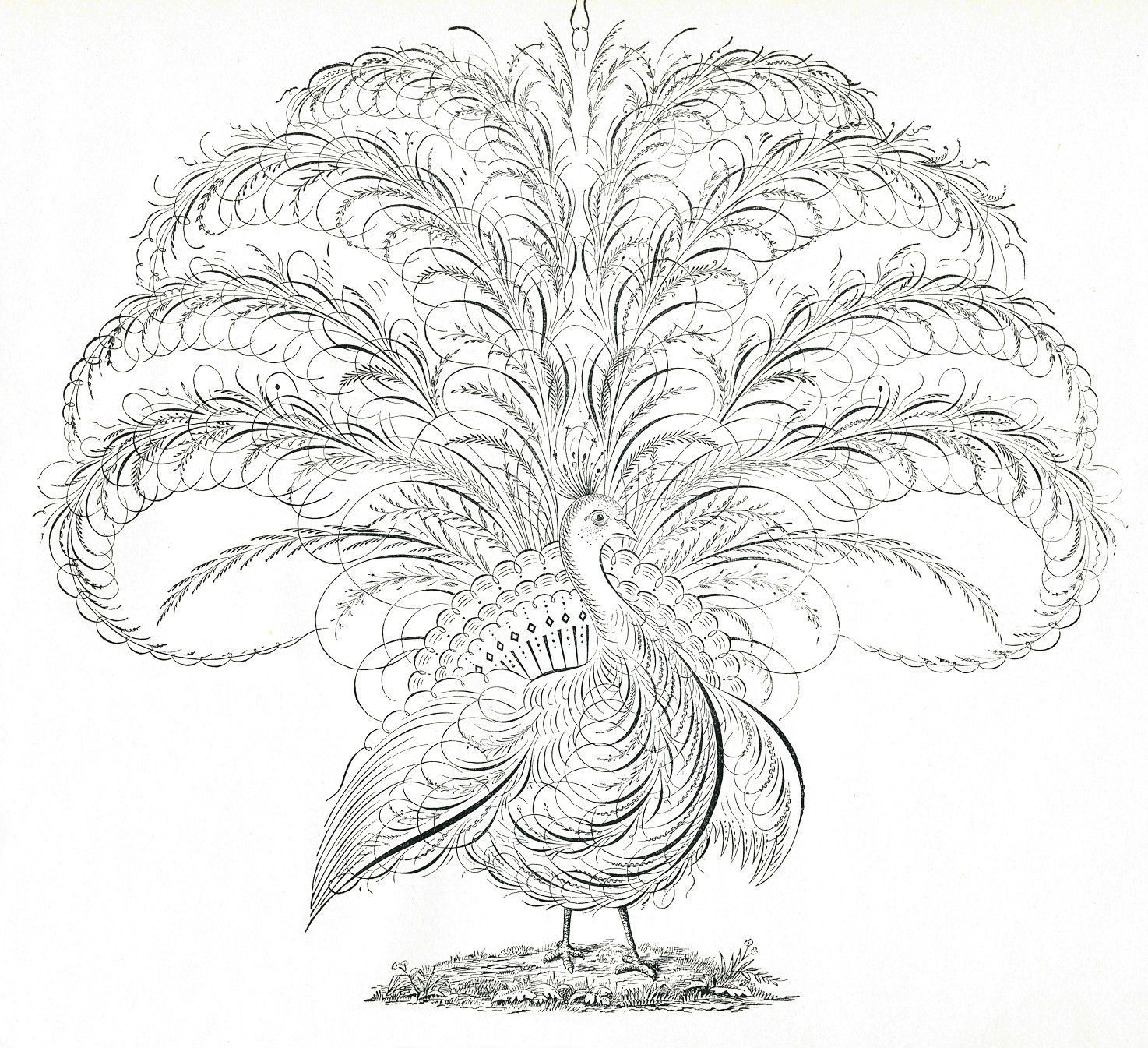 Vintage peacock shabby chic transfer//sticker decoupageTypography spencerian