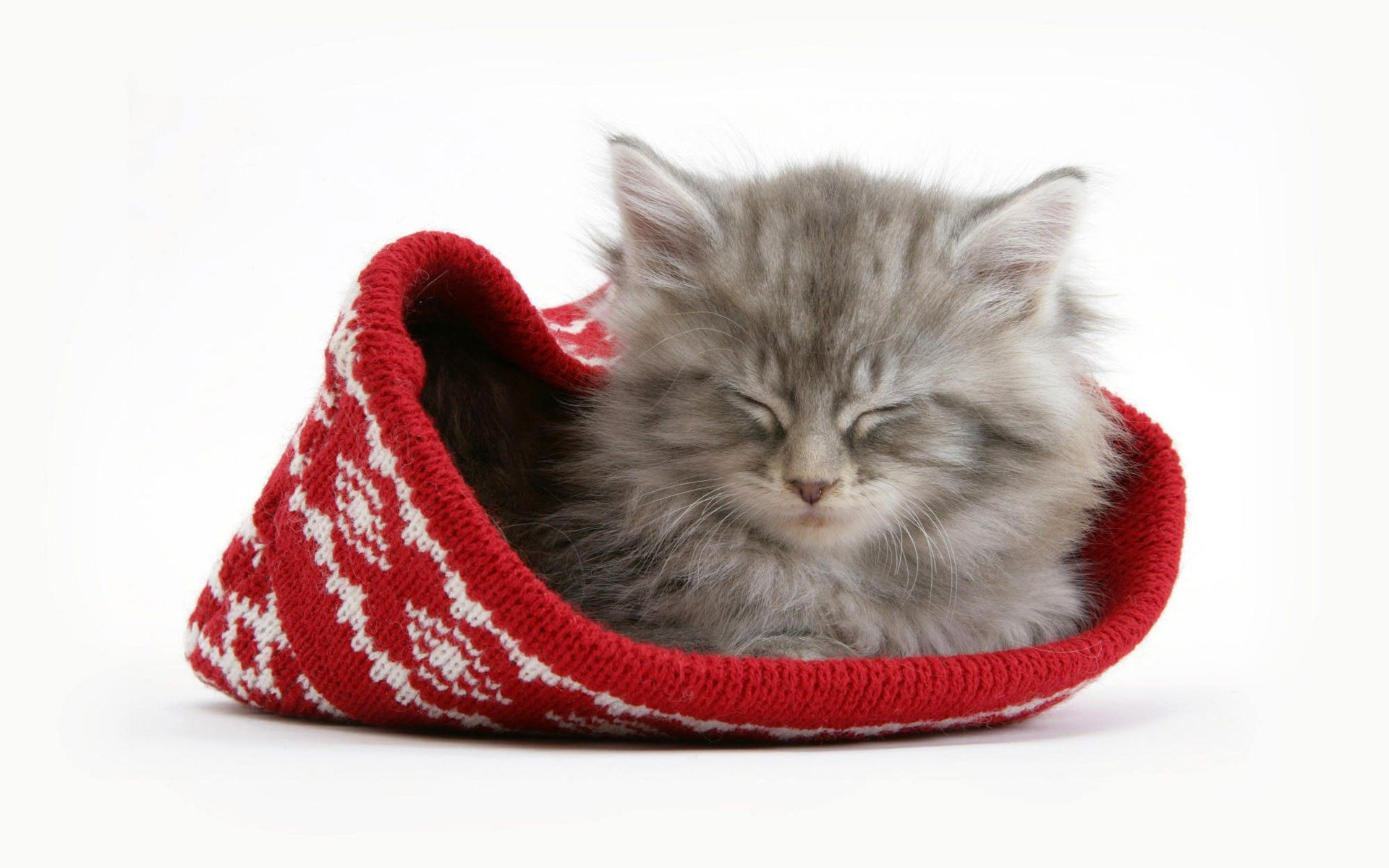 Fond Ecran Chat Noel Cute Kittens Chaton Gris Chatons Duveteux