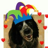 This is Tinkle - he is the much-loved companion of Kat Hazelton and this is his Birthday Foto - his Birthday was on the 20th of June  but I didn't get my computer to  co-operate in time to put it on then! Hope you had a lovely Birthday, Tinkle!