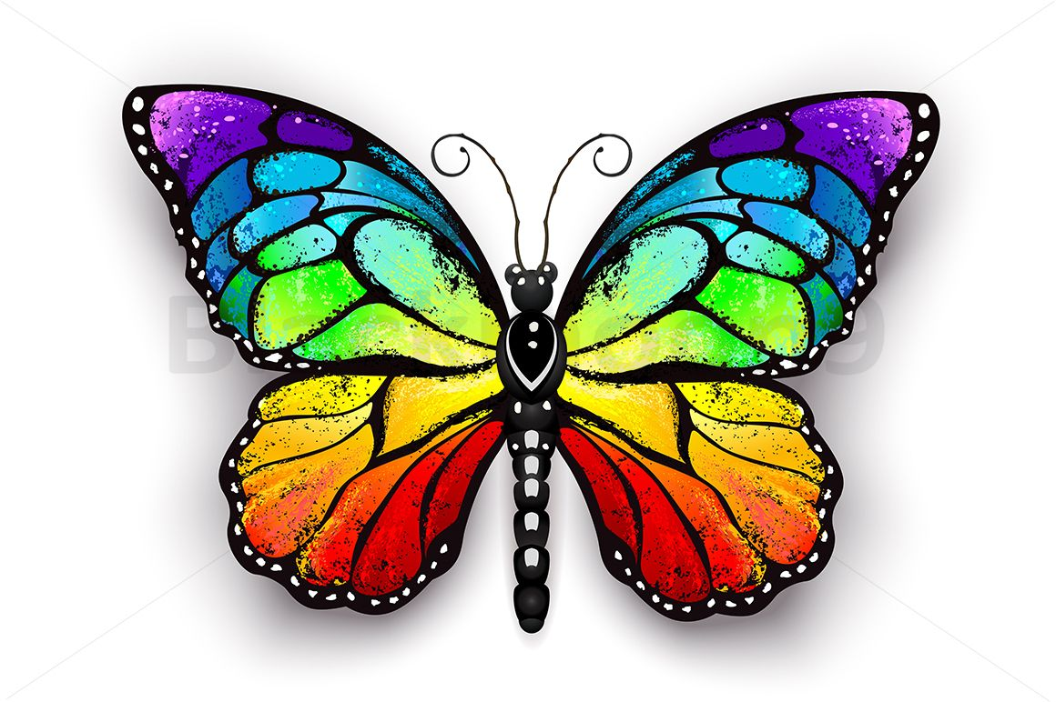 Rainbow Monarch Butterfly Butterfly Drawing Butterfly Canvas
