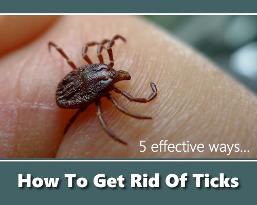 Image result for tick pest control