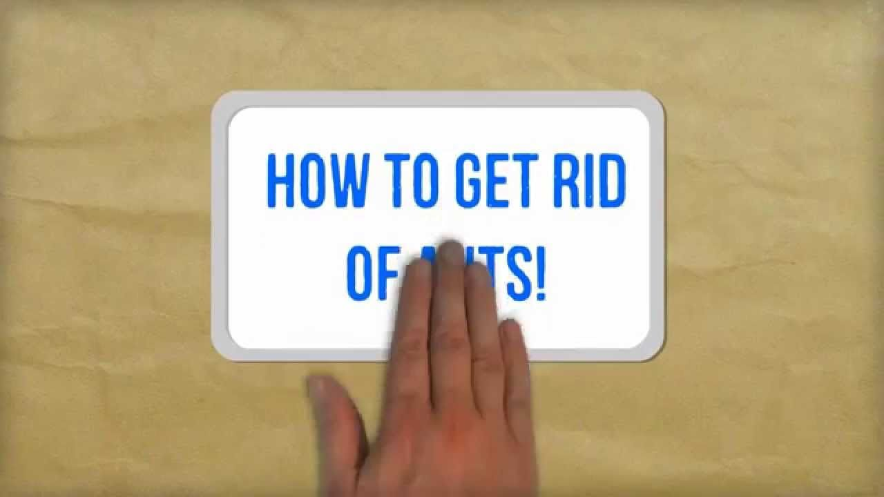 How To Get Rid Of Ants Naturally Best Tips For Getting Rid Of