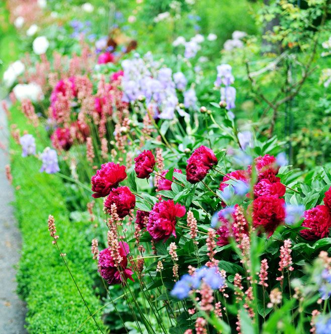 How to plant a herbaceous perennial border herbaceous for Garden flower borders designs