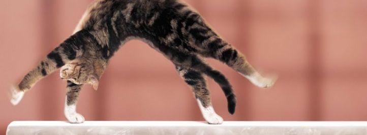 gymnastique aux Jeux Olympiques