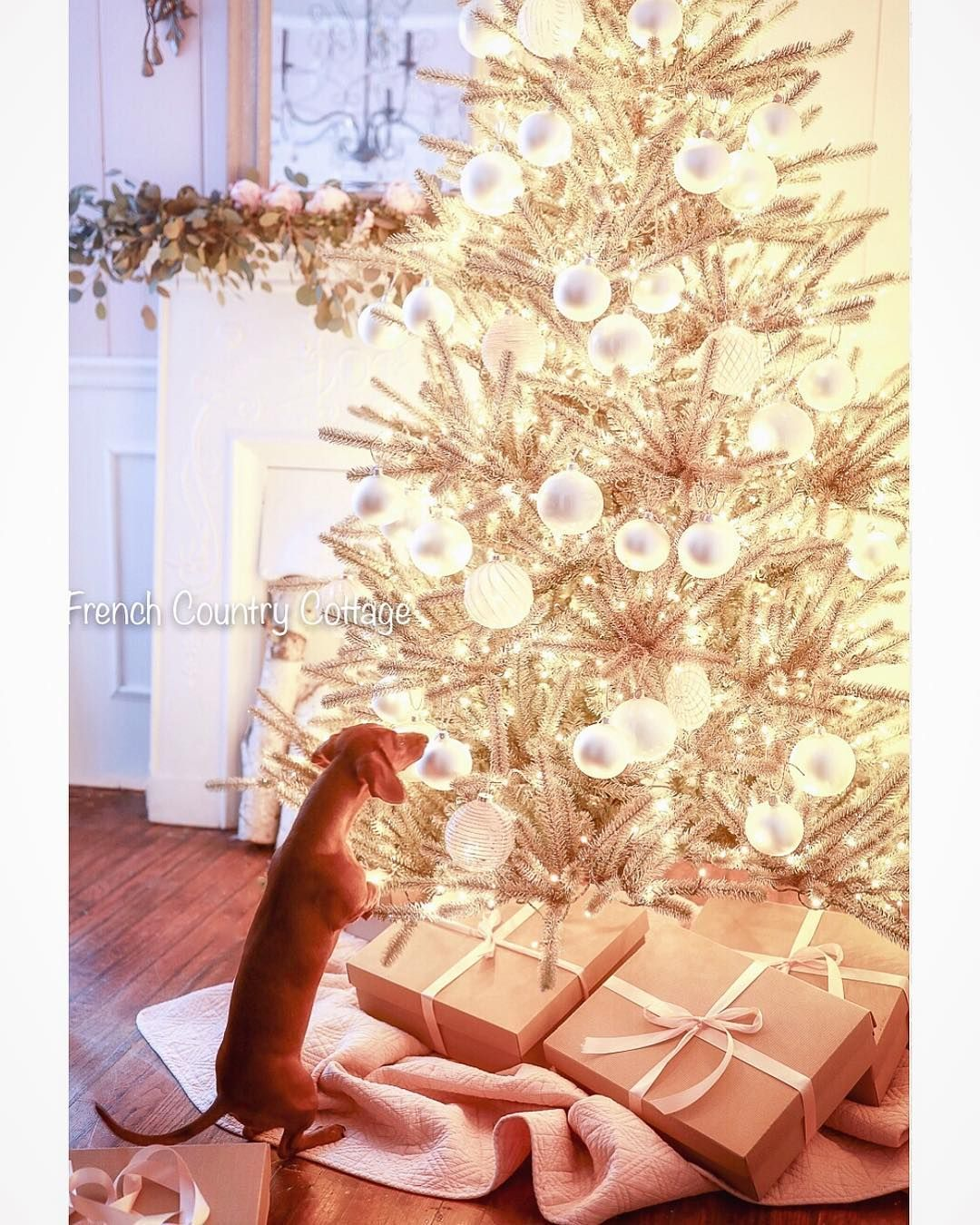 Holiday pet photo by frenchcountrycottage ; From Instagram