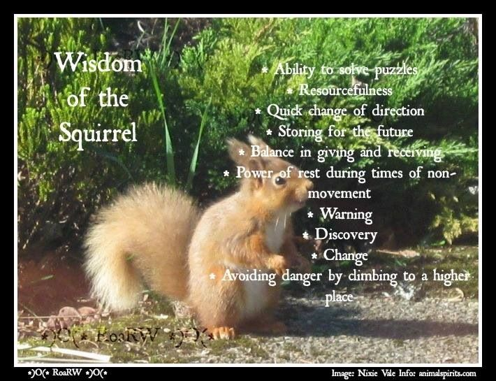 wisdom of the squirrel