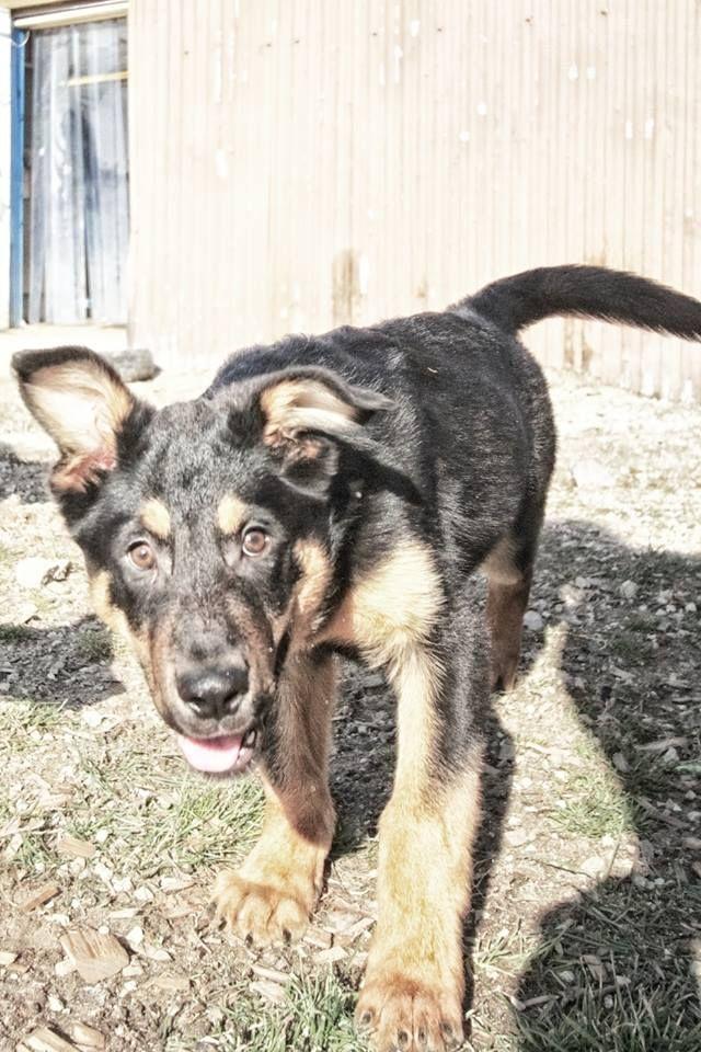 Adopt Bear on Puppies, Crate training, Bear