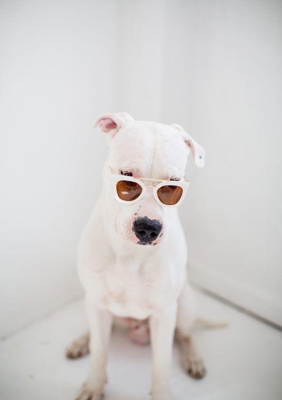 Fantastic Dogo Chubby Adorable Dog - eecb2ea691d26785230b46e98809b1a8  Trends_67702  .jpg