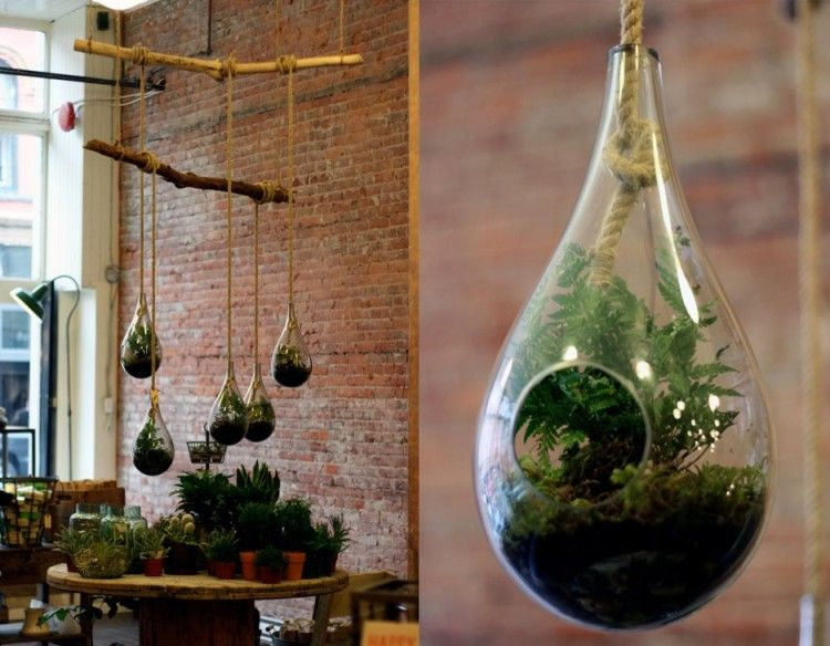 Exemple of a home made terrarium