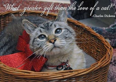 dickens on cats