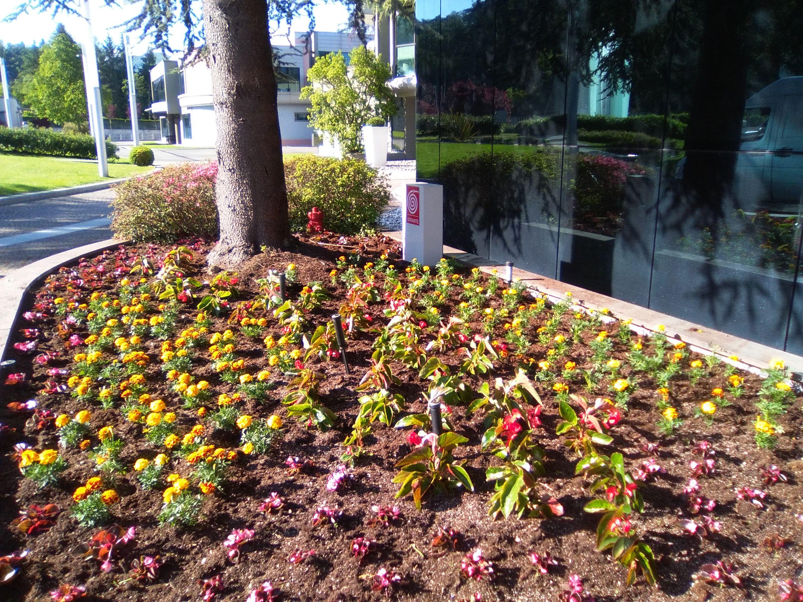 esempi di aiuole fiorite cool viburno tino piante da