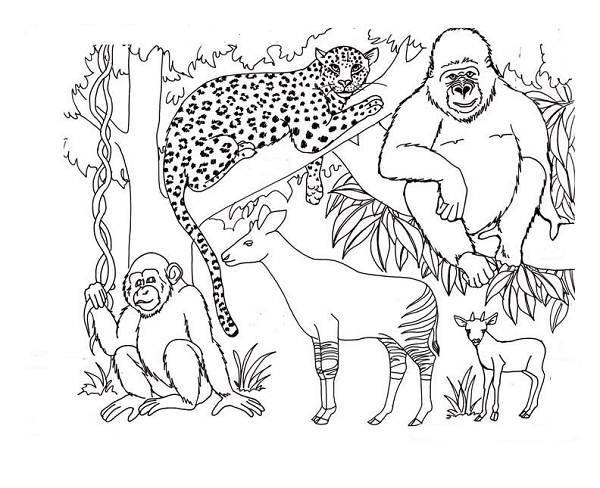 African Savanna Coloring Pages