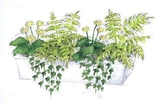 Kompozycja Z Kwiatow Doniczkowych Na Zacieniony Balkon Lub Taras Muratordom Pl Hedera Helix Plants Herbs