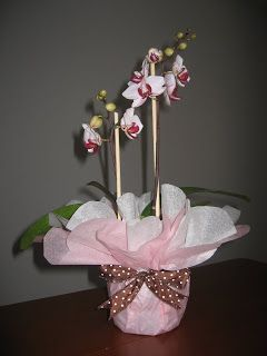 Trieu Love: Orchids Gift-wrapped