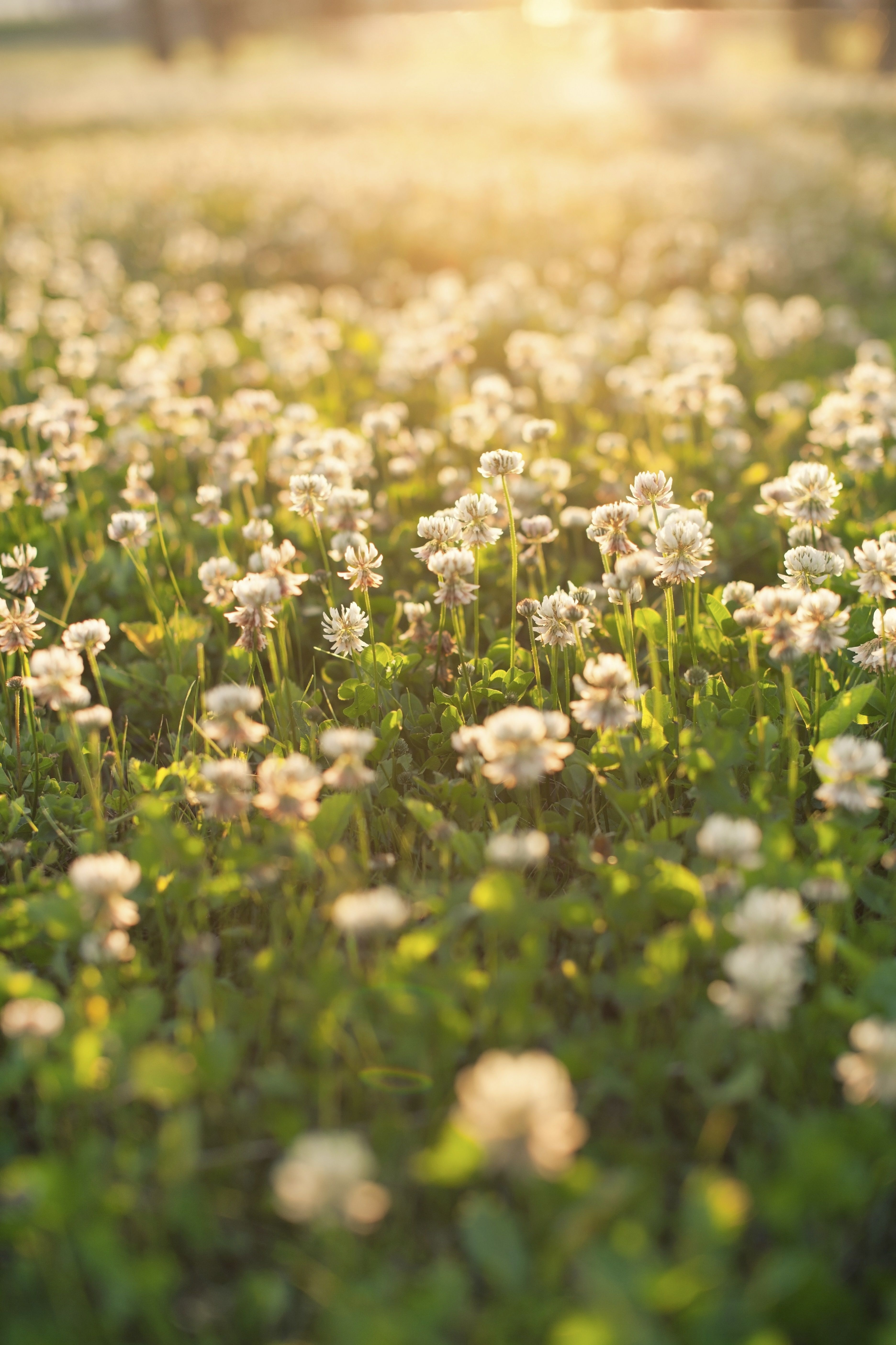 Replace your lawn with a meadowit will save you